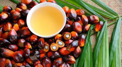12 receitas com azeite de dendê para sentir o sabor da culinária baiana