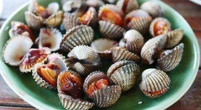7 receitas de berbigão para os amantes do sabor do mar