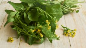 7 receitas com folha de mostarda para variar as suas refeições