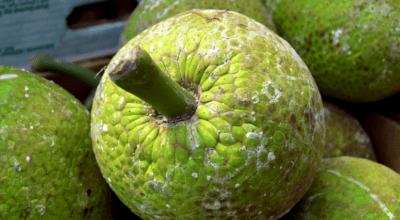 7 receitas com fruta-pão para preparar opções doces e salgadas deliciosas
