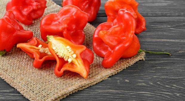 10 receitas com pimenta cambuci para incluir esse ingrediente ao seu menu